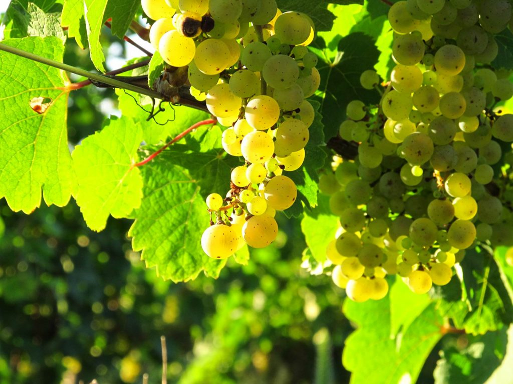 Glowing Grapes